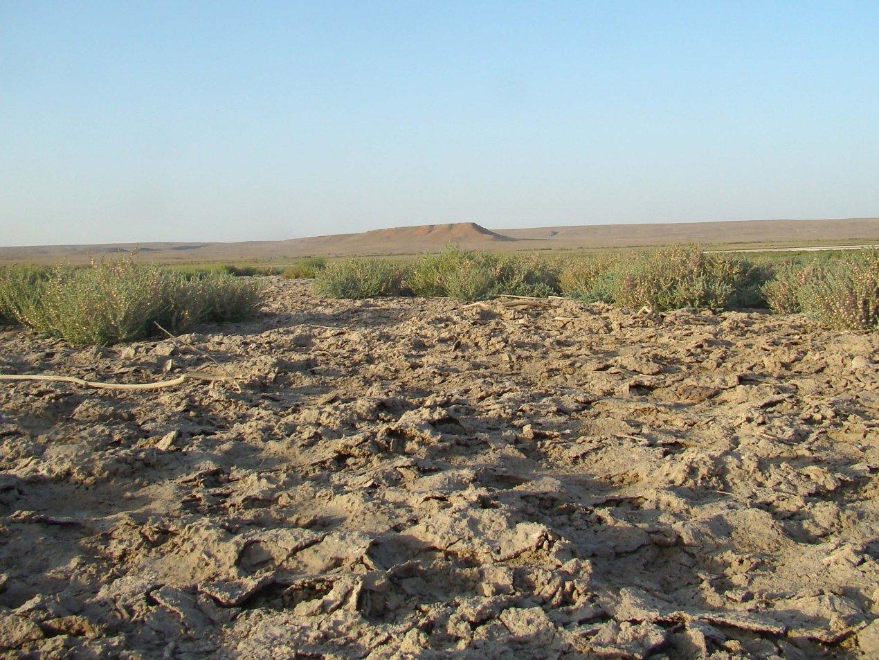 Солончаковая пустыня